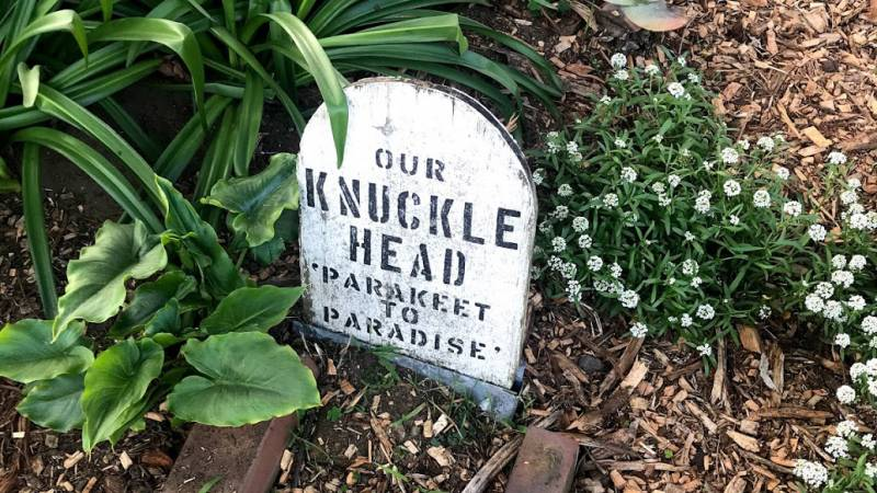 Knuckle Head the parakeet's gravestone in the Presidio pet cemetary.
