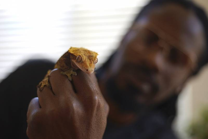 Scid Howard and Nipsey the Gecko