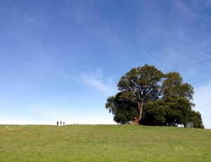 The Umbrella Tree on Sonoma Mountain serves as a hidden fort for kids.