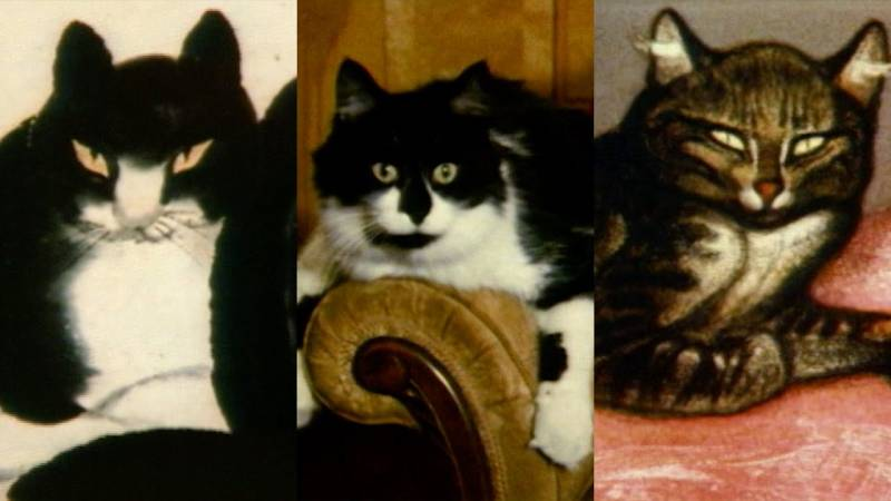Watch A Very Weird Short Film About The History Of Cats In Art At The Met Kqed