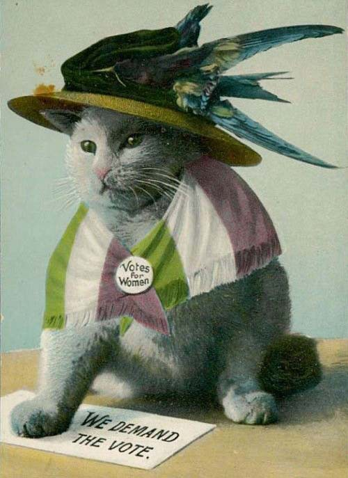 A cat wearing a hat, suffrage flag and 'Votes For Women' pin.