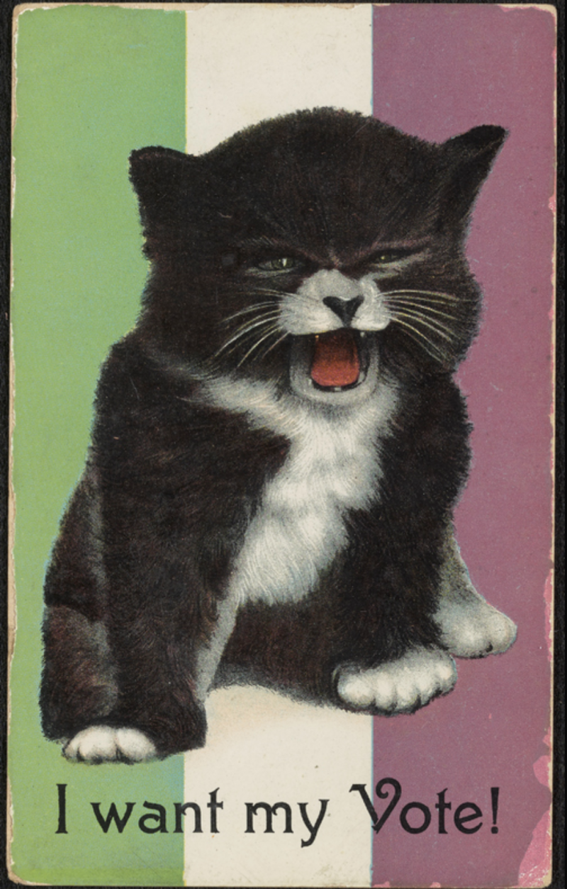 This 1908 postcard features art depicting an angry kitten with text that reads 'I want my vote!' and a background depicting the flag of the British suffrage movement.
