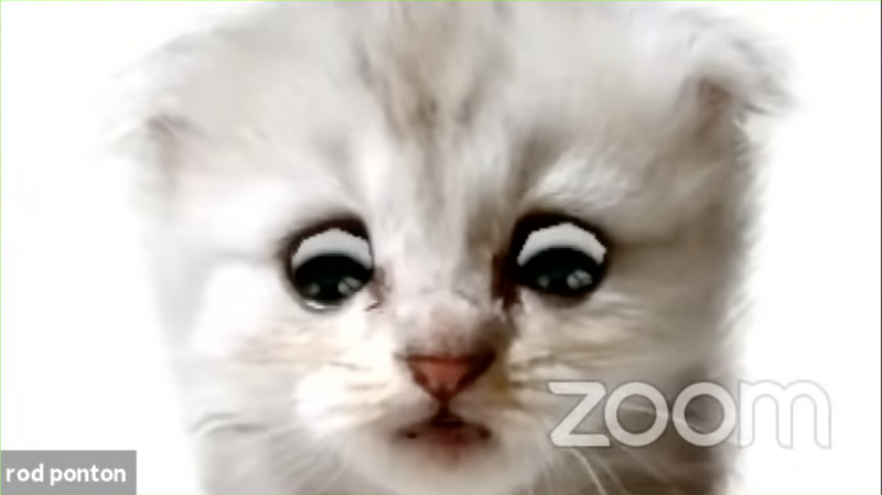 Lawyer Rod Ponton trapped inside his kitten filter, in the now-viral Zoom video.