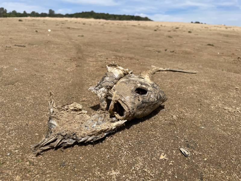 A dried shell of a former living creature at Lake Folsom.