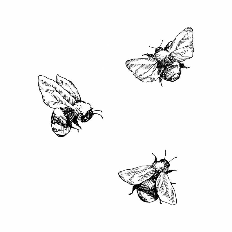 An illustration of three bumble bees in black and white floating