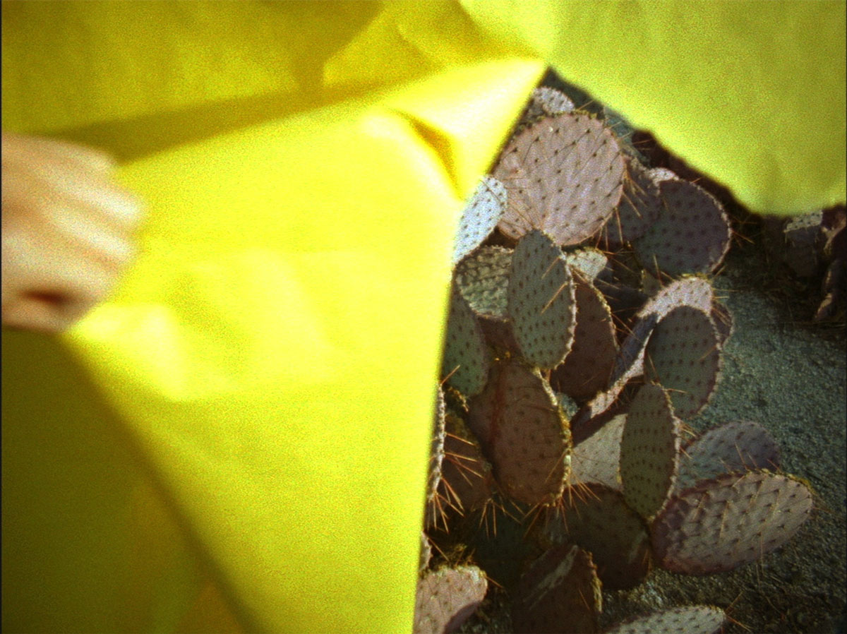 A white hand at the left edge of the image tears yellow paper to reveal an image of cactus.