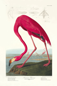 birds-america-flamingo-200-102442-1