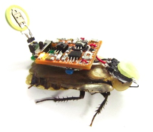 Wiring Insects for Hands-On Science Experiments