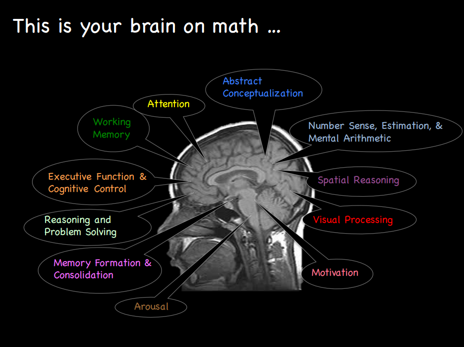 The various regions of the brain recruited when learning fractions.