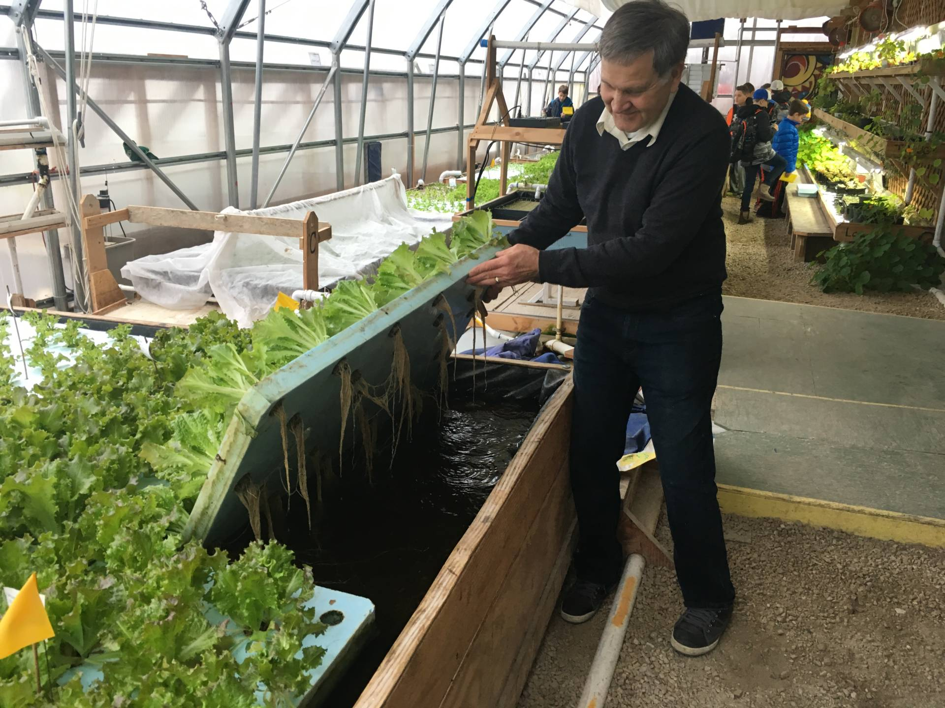 This is Pat Wilborn owner of PortFish, an aquaponics farm in Port Washington, WI. My 6th grade students were there last week for an urban farming/sustainability expedition. The water these plants grown in are a part of a closed loop system that also grows fish. Basically the plants, bacteria in the filters, and fish form a self cleaning system where the waste products of one, become the nutrients for the other. Pat can grow year round using this system using less energy, resources, and space even in the harsh winters in Wisconsin.