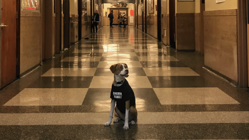 Making Comfort Dogs an Everyday Part of School