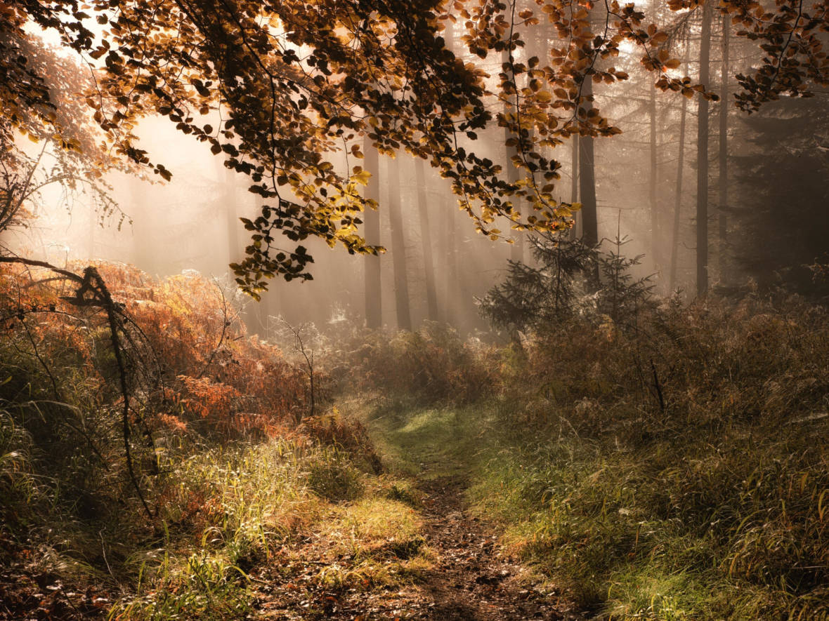 Suffering From Nature Deficit Disorder? Try Forest Bathing
