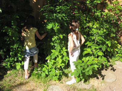 girls in raspberry patch