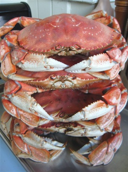 Stacked Crabs