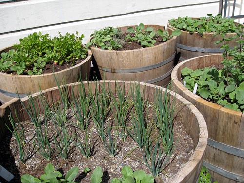 alembic garden