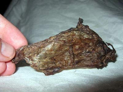 whole placenta