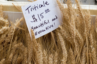 Eatwell Farm Triticale