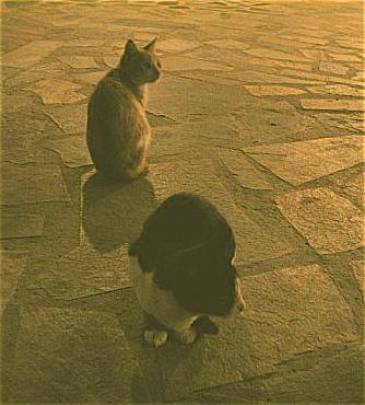Taverna Cats