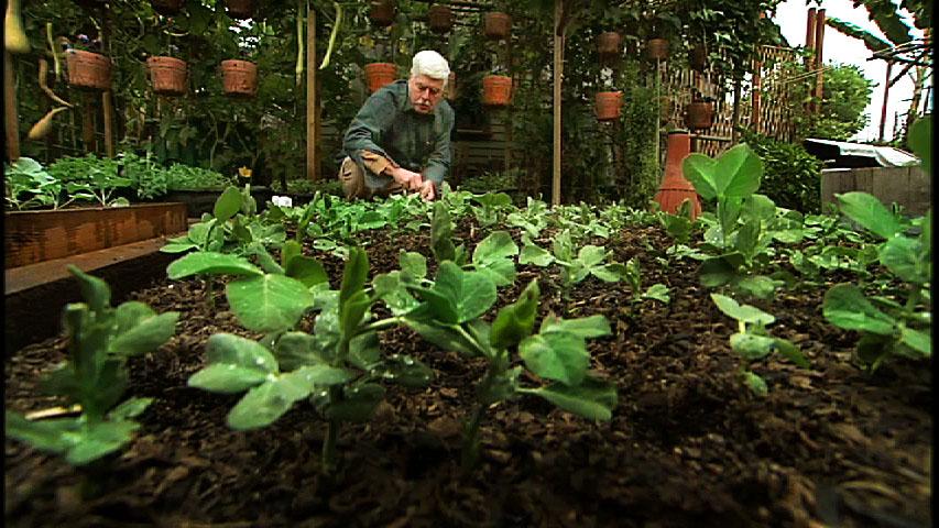 Dervaes seedings