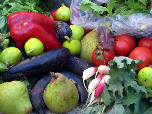 free farmstand bounty