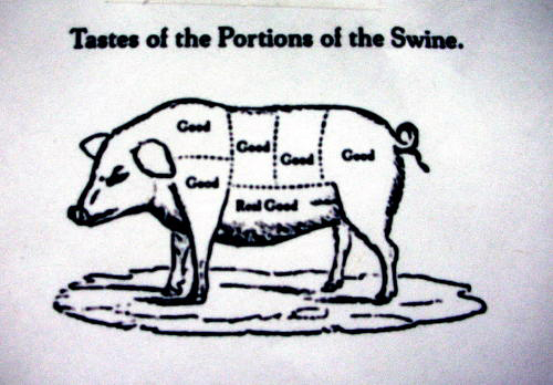 Swine diagram