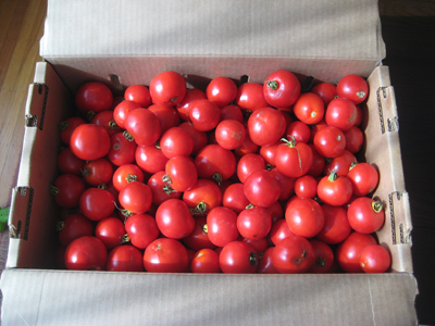 box of early girl tomatoes