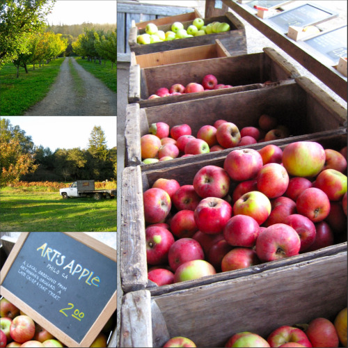 Apples and Orchards at The Apple Farm