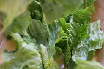 falling romaine leaves