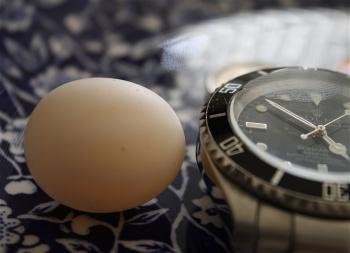 parrot egg