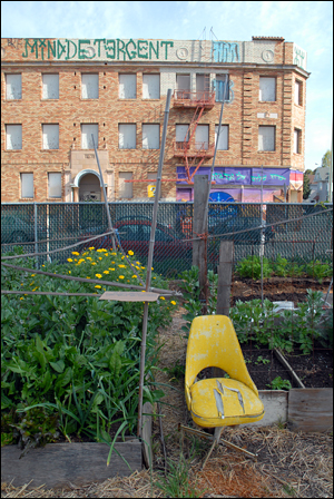 Novella Carpenter's GhostTown Farm in Oakland. Photo by Wendy Goodfriend