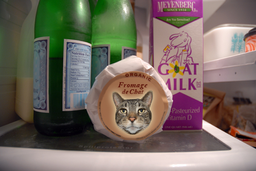 Fromage de Chat (aka Cat Milk Cheese)