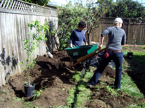 planting the garden using a wheelbarrow