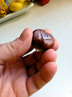 scored chestnut