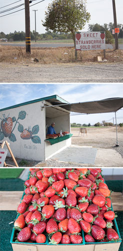 Roadside strawberries