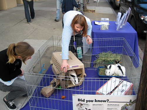 bunnies for adoption at previous vegan bakesale
