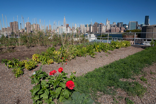 NYC rooftop garden