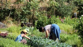 The Perennial Plate: California Gleaning – Farm to Pantry