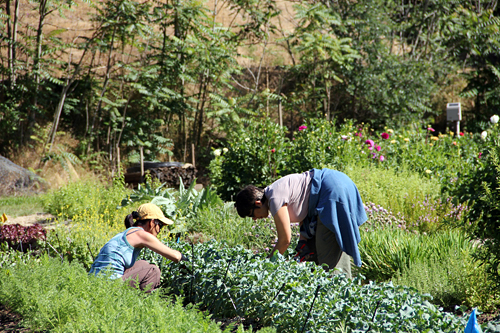 Gleaning - Farm to Pantry. Photo: The Perennial Plate