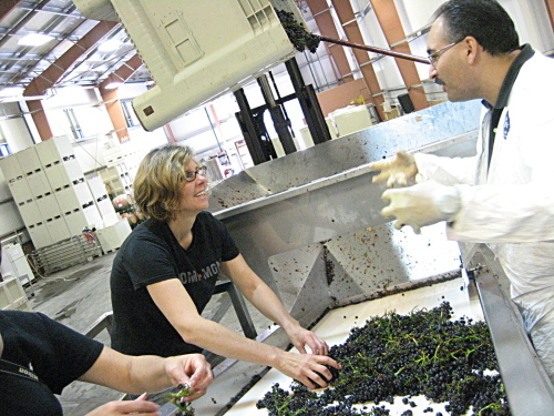 Andrea sorting grapes
