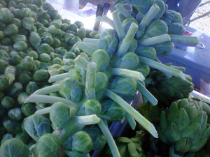 Stalk of Brussels Sprouts