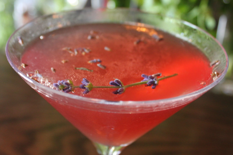 Lavender Splash Cocktail, Fresh from the Medlock Ames' Garden