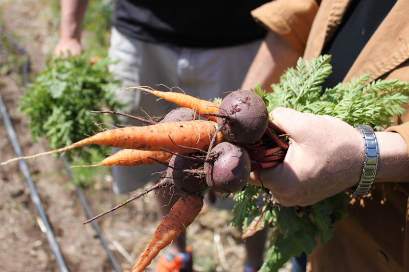 Biodynamically Grown Veggies