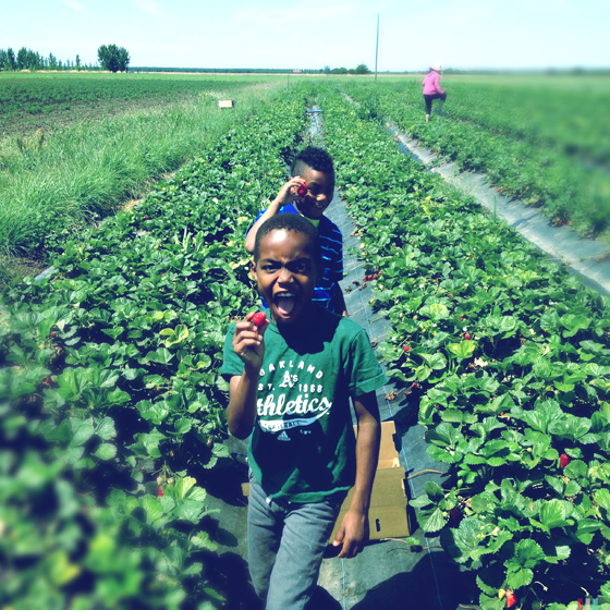 Kids picking strawberries at Eatwell Farm. Photo by Alicia Relles