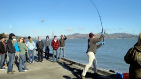 Foraging For Fish in the San Francisco Bay