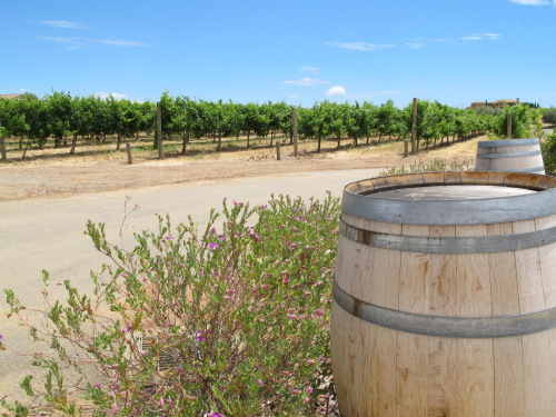 Livermore's Wood Family Vineyards