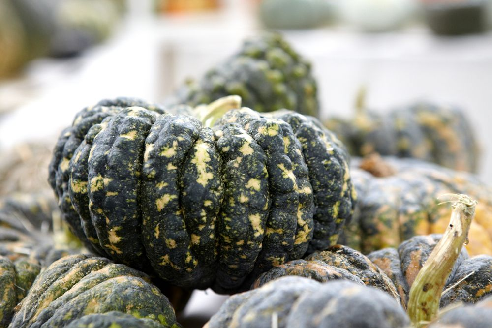 Heirloom squash. Photo: Marla Aufmuth