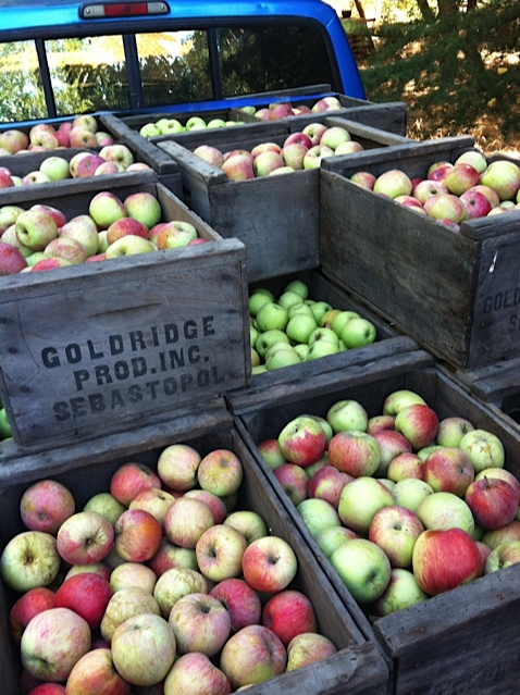 Boxes of Sebastopol apples. Photo: Ellen Cavalli