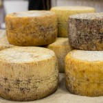 Pecorino Filiano DOP