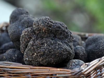 Truffles for Locavores?