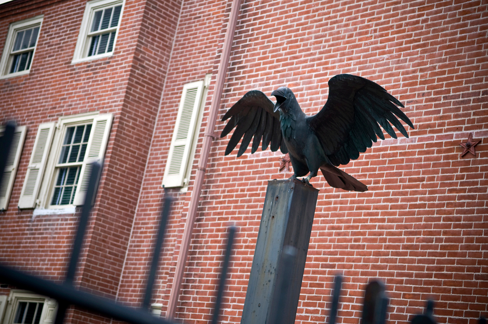 Raven at Edgar Allen Poe House. Photo: iStockphoto